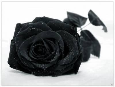 Le noir : Symbole et histoire Alknezjy